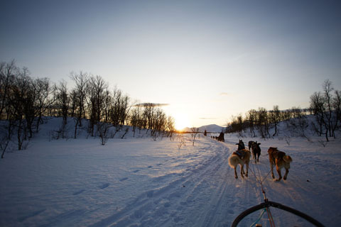 Dogsledding in Tromsø