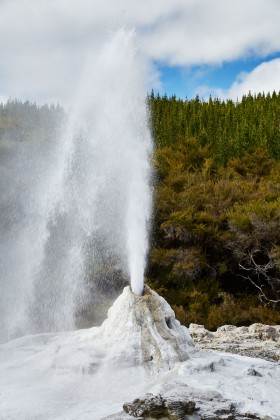 The Lady Knox geyser in Waiotapu