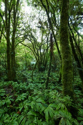Majestic forest in Waitomo