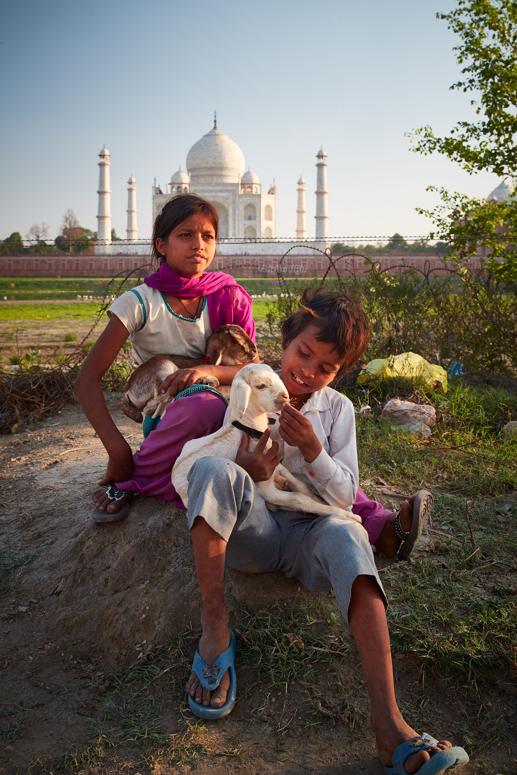 Two farmer kids play with their baby goats in Agra