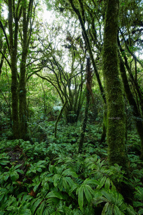 The beautiful forest of Waikato in New Zealand