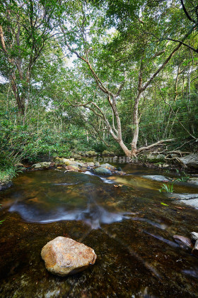 Stream in the Pat Sing Leng Nature Trail