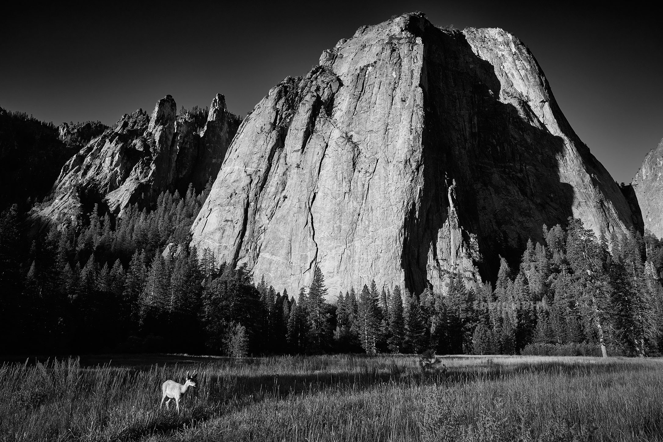 The Meadows in Yosemite National Park