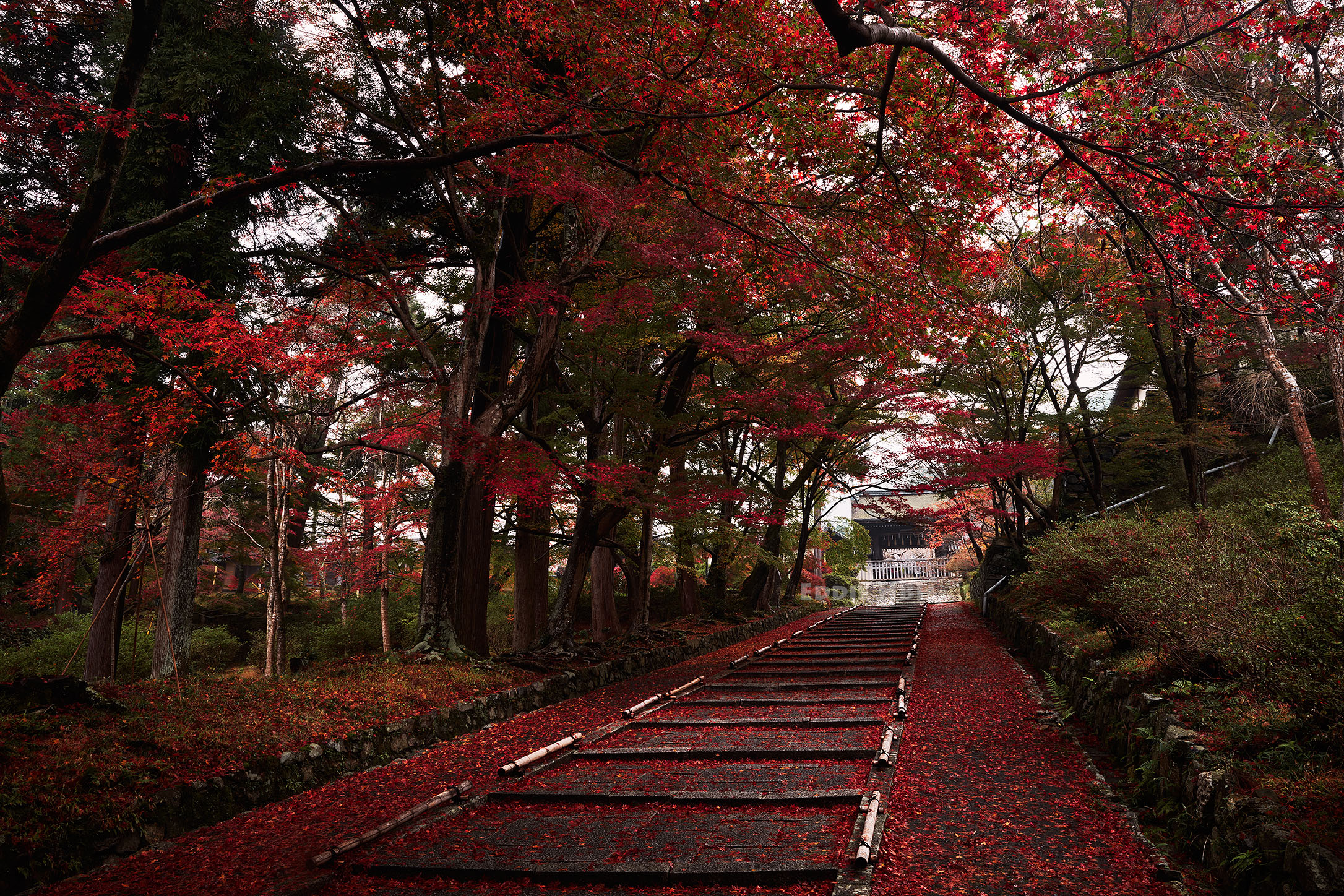 Red maple leaves cover the stairs to the Bishamondou temple