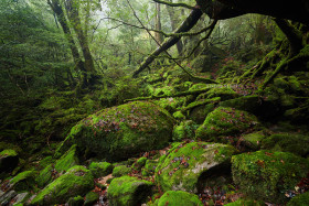 Beautiful Forest of Yakushima