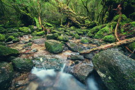 Beautiful Stream in Shiratani Unsuikyou, Yakushima